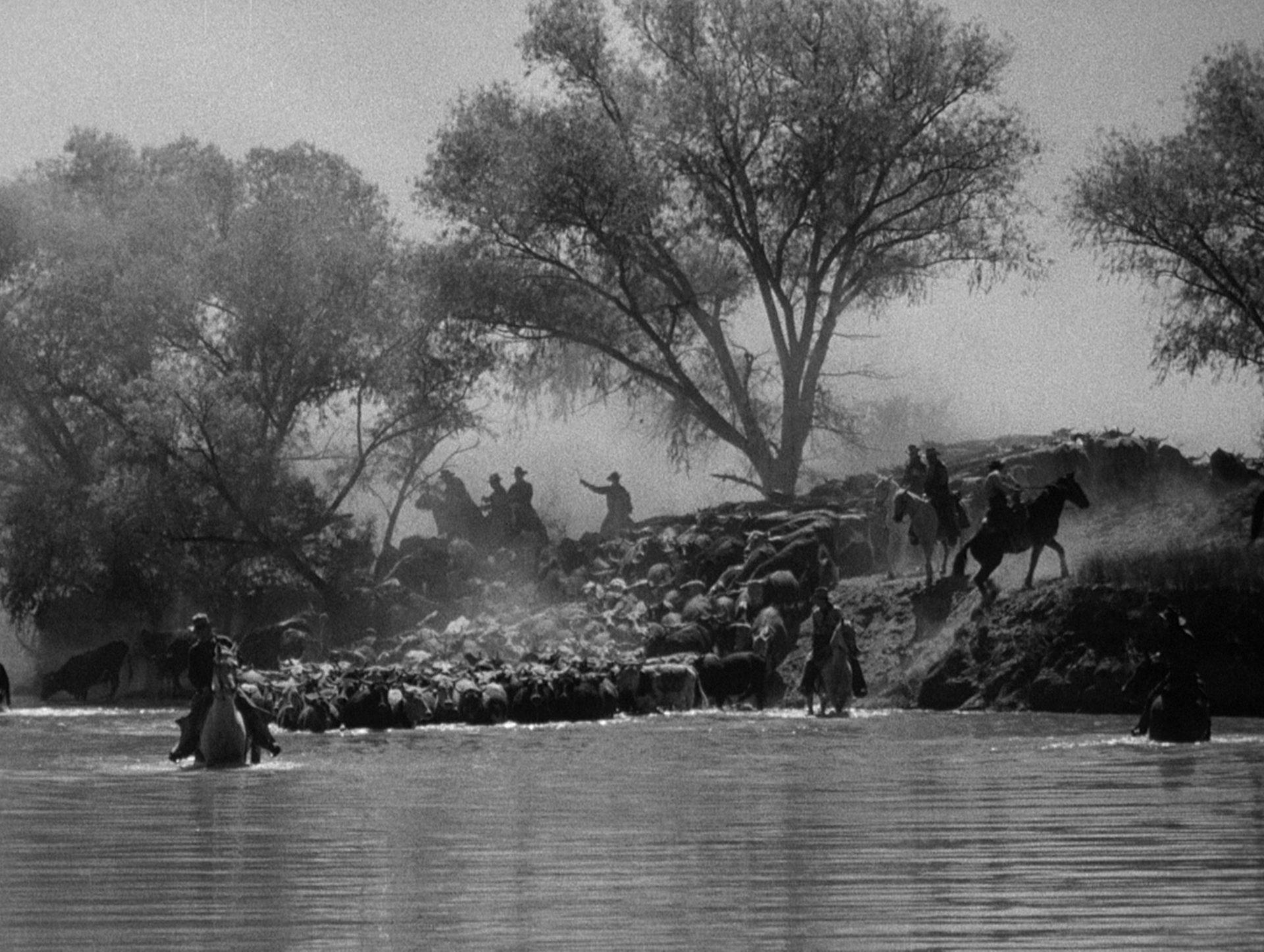 Cowboys treiben zu Pferd eine Rinderherde in den Red River.