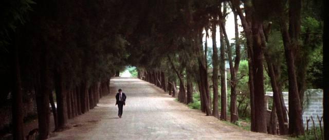 Marlowe wandelt alleine eine Allee entlang