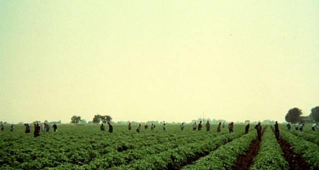 eine Reihe von Arbeitern auf einem Feld