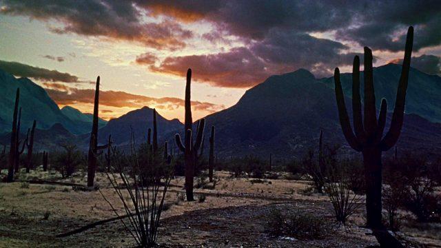 eine Reihe von Kakteen vor elegischem Hintergrund in der Wüste