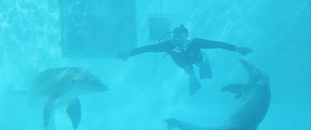Ein Taucher im Wasser mit den beiden Delfinen.