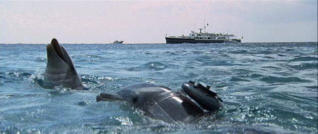 Die beiden Delfine im Meer, auf ihren Körpern sind Sprengladungen drapiert, im Hintergrund ankert eine Jacht.
